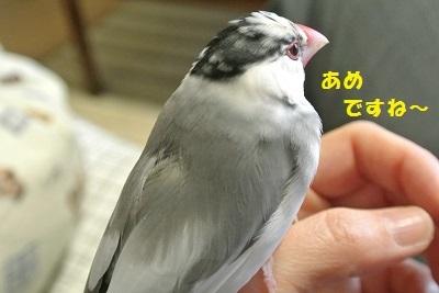 DSC_7045済