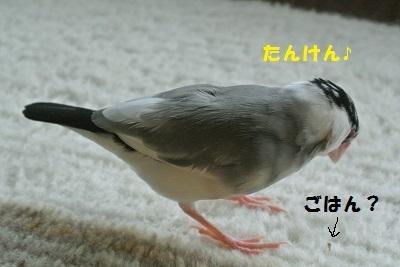 DSC_7121済