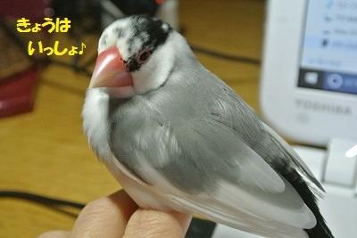 DSC_6906.jpg
