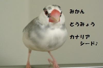 DSC_7002.jpg