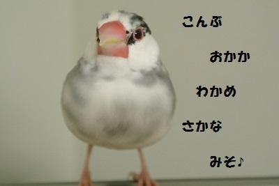 DSC_7004.jpg