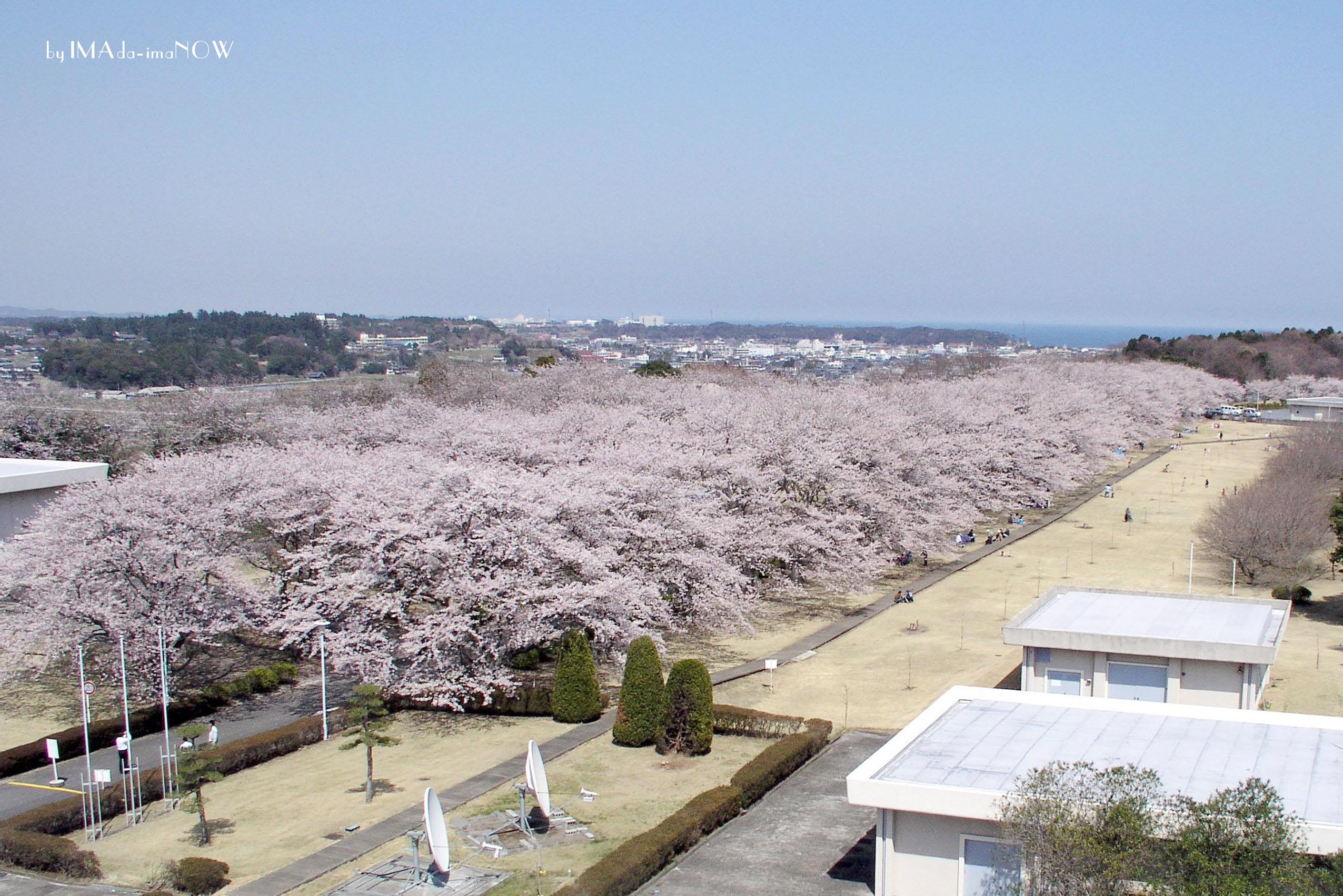 2004 桜並木
