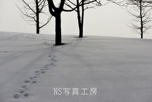 _DSB9461.jpg