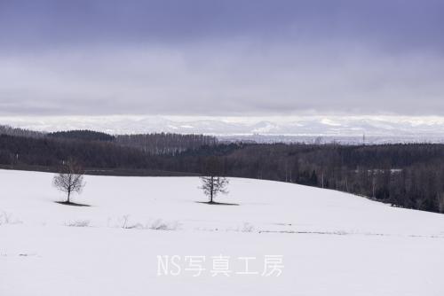 _DSY1501.jpg