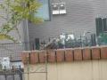 ナンフェア 鳥