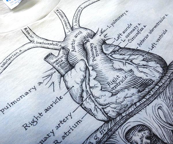 ts_organs08.jpg