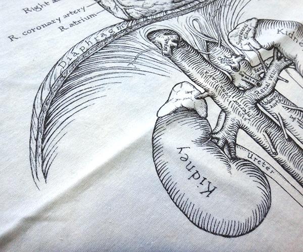 ts_organs09.jpg