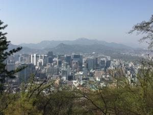ソウルの桜3