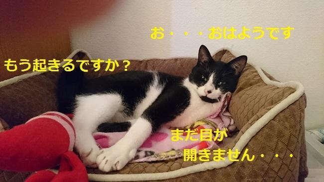 寝起きのびーちゃん
