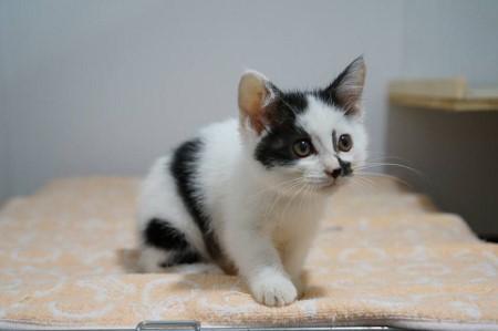 cat550-2 (450x299)