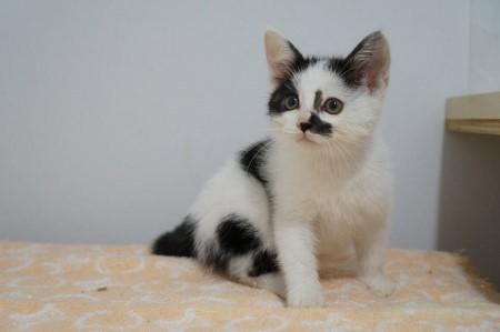 cat550-3 (450x299)