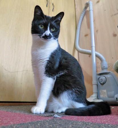 cat495-9 (415x450)