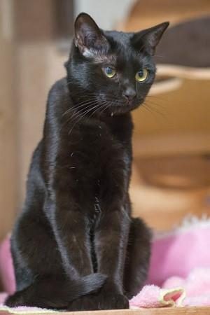 cat341-6 (300x450)