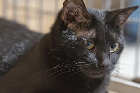 cat341-7 (450x300)