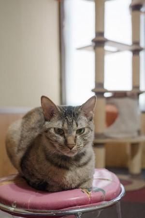 cat353-9 (300x450)