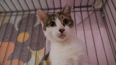 cat590-1 (450x254)