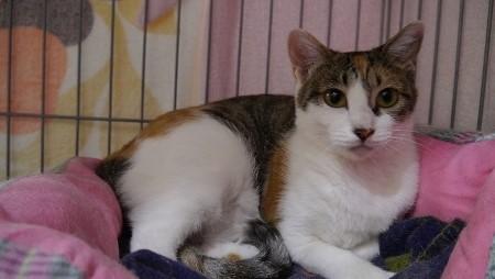 cat590-2 (450x254)