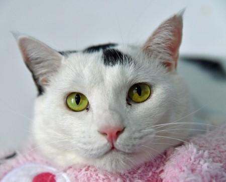cat274-13 (450x363)