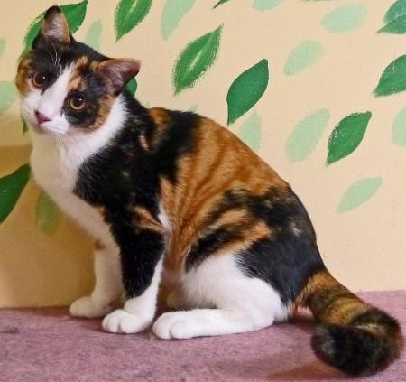 cat534-3 (450x423)