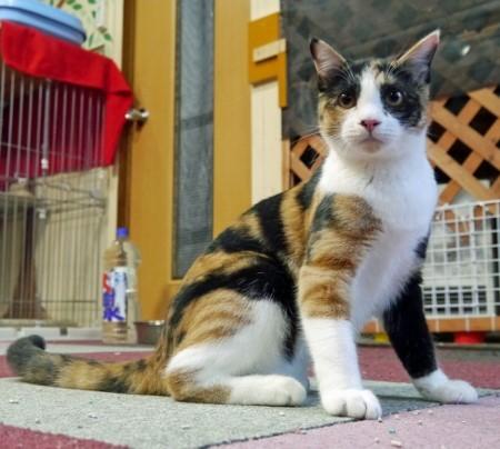 cat534-6 (450x404)