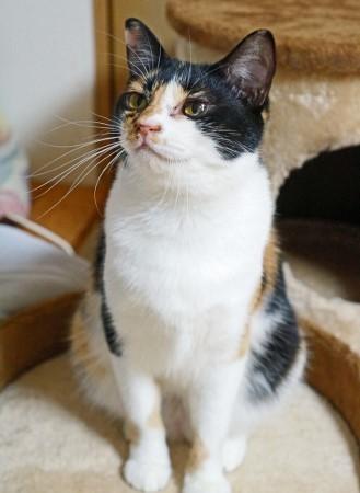 cat506-4[1] (329x450)