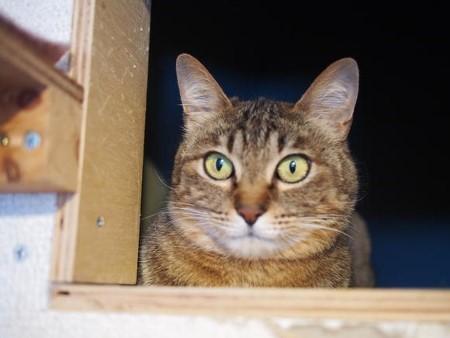 cat406-6[1] (450x338) (450x338)