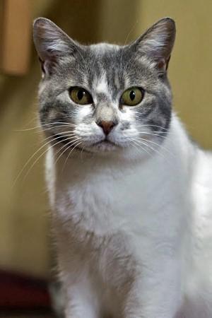 cat410-5[1] (300x450) (300x450)
