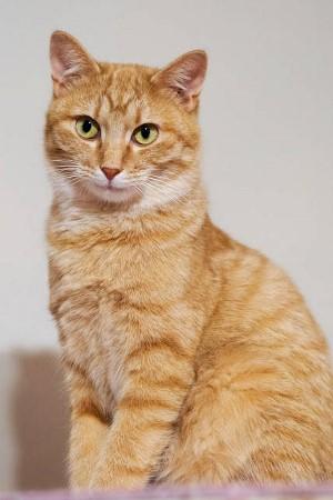 cat498-3 (300x450)