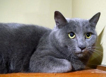 cat510-3 (450x326)