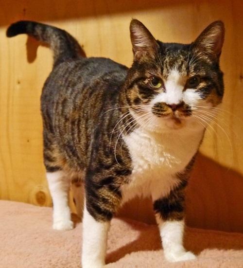 cat531-4[1]