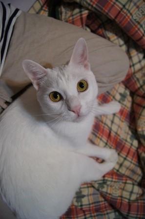 cat284-19[1] (297x448)