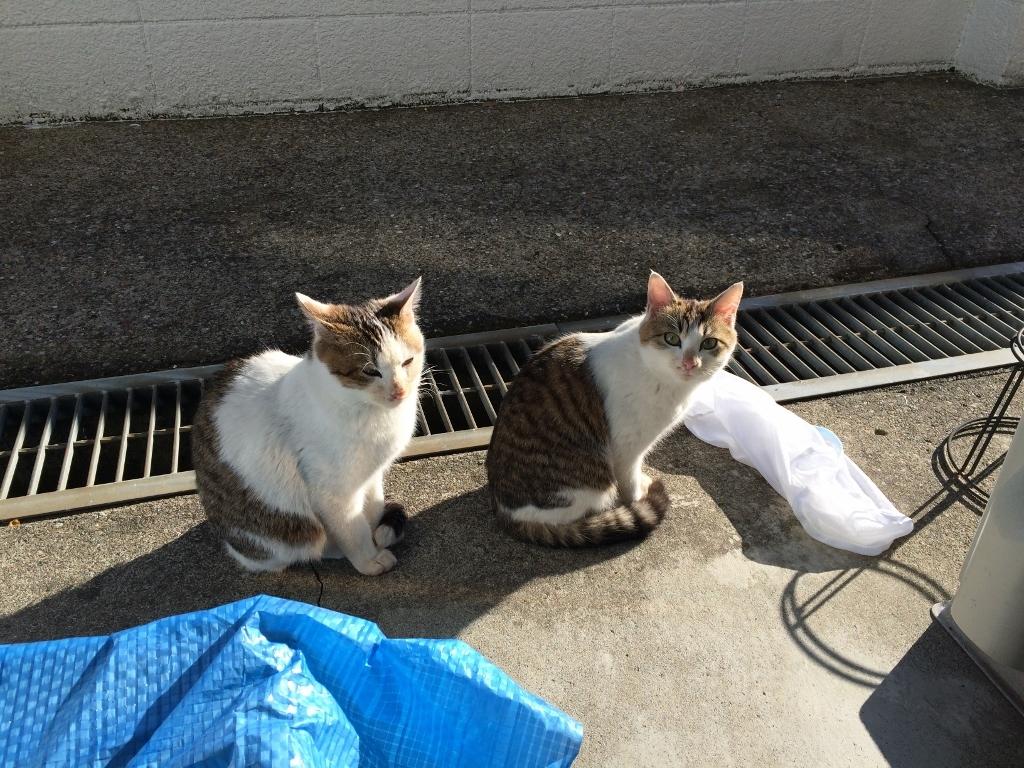 ガースケ&モーコ (3)