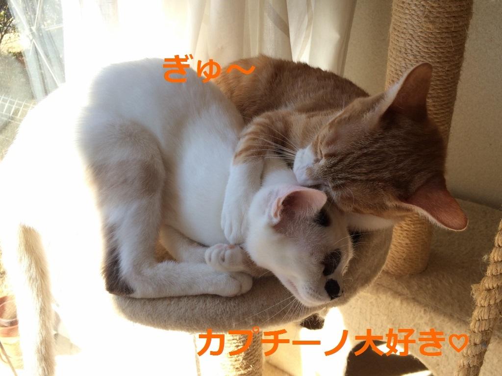 チャオ&カプチーノ (9)
