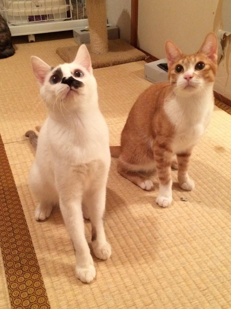 チャオ&カプチーノ (11)
