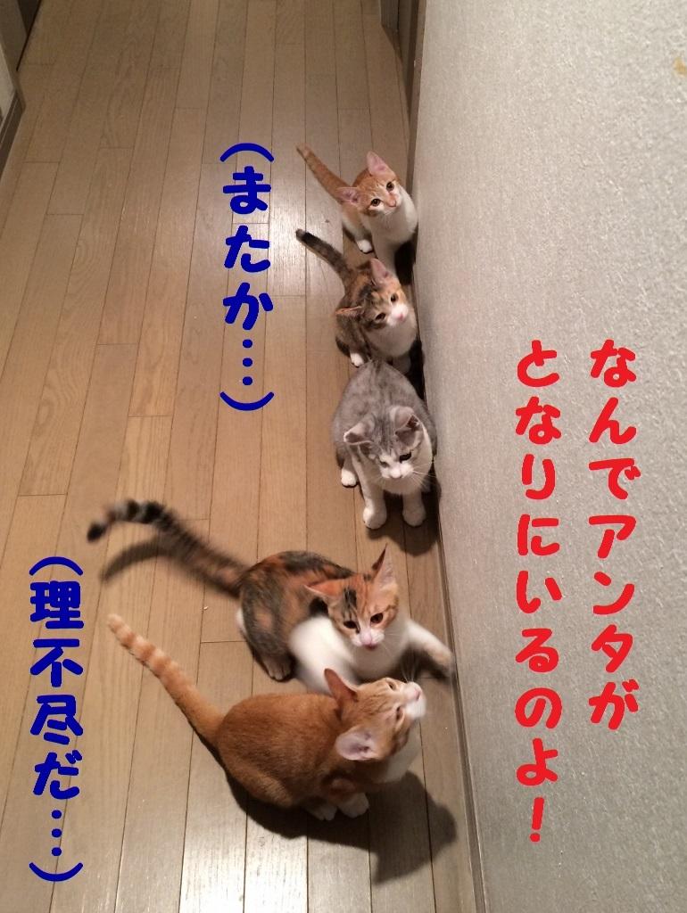 みーたん (11)