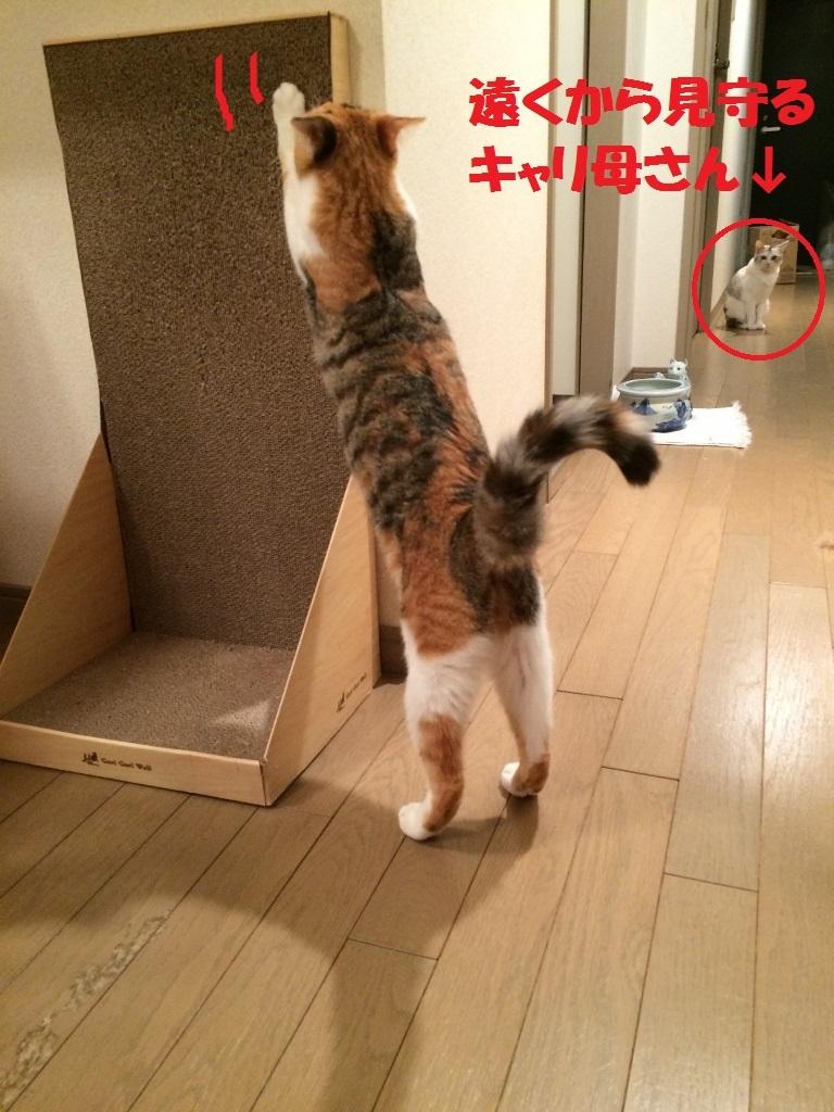 キャリコ親子 (5)