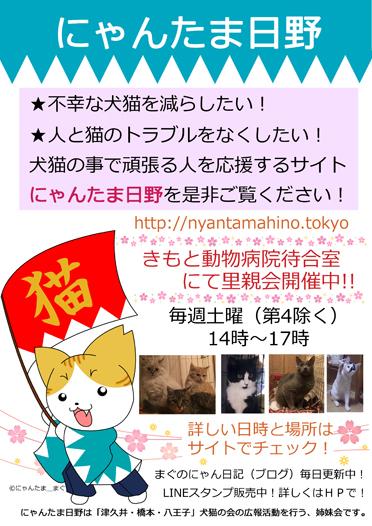 にゃんたま日野ポスター新撰2