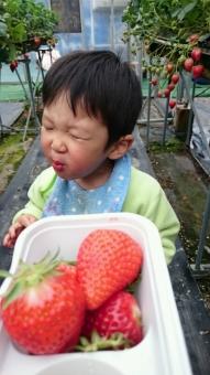 イチゴうまし