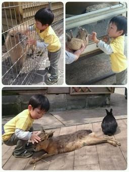 動物にタッチ