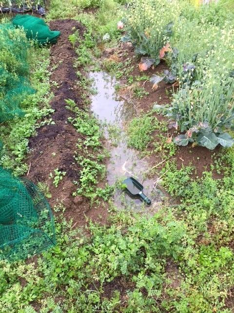 0411雨の畑3