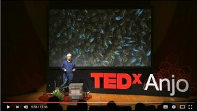 Bees are Our Greatest Teachers Yasuki Funahashi TEDxAnjo