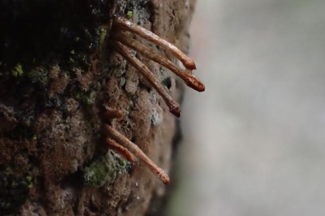 コケか粘菌