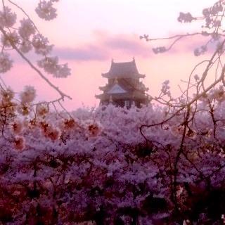 岡山城00 桜 後楽園夕暮れDSC_0426 岡山 さくらんカーニバル