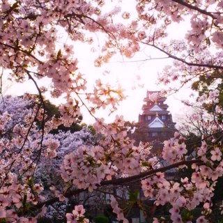 岡山城01 桜 後楽園 夕暮れDSC_0426 岡山 さくらんカーニバル