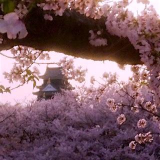 岡山城04 桜 後楽園 夕暮れDSC_0426 岡山 さくらんカーニバル