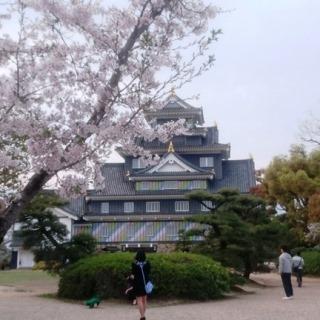 岡山城 MT とさくら