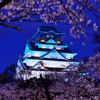 岡山城 青 桜