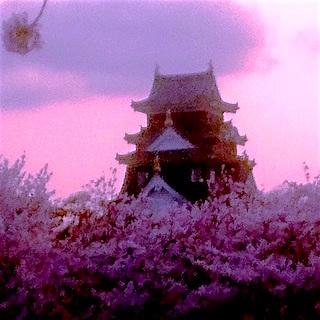 岡山城 桜 畑 夕暮れDSC_0459