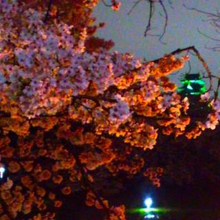 岡山城 夜桜DSC_1774