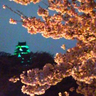 岡山城 夜桜DSC_1811